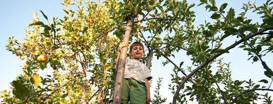 17-apple-tree-climbing-in-the-garden-orchard
