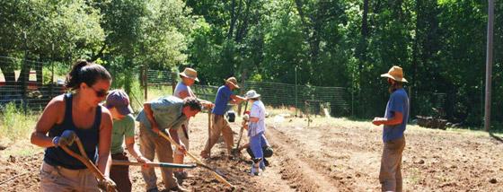 llan-digging-beds