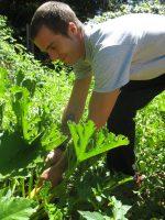 Jeffrey Dupra picking squash at the Turning Point garden.