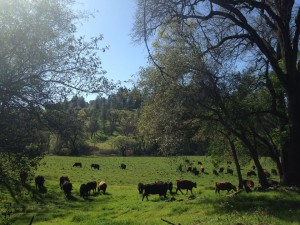 elster ranch spring 2015