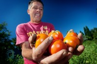 Greg Weber with some of his tasty organic tomatoes!