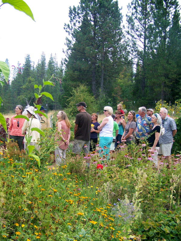 Connect with Local Farmers, Eat Healthier and Support Local Farmers | Sierra Harvest -farm tour at food love farm - nevada city