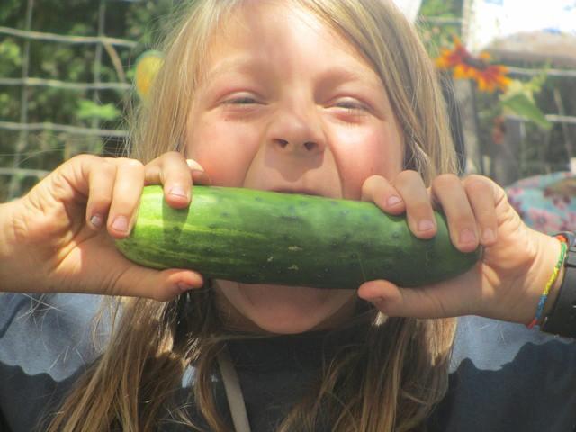 Sierra Harvest children's programsTN
