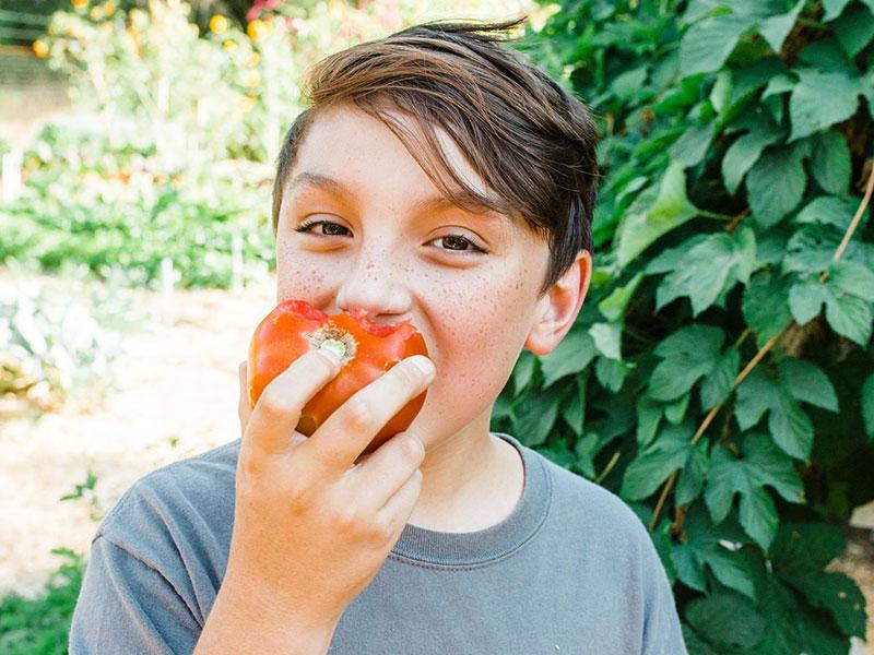 food love farm - nutrition and farm education in nevada city - sierra harvest