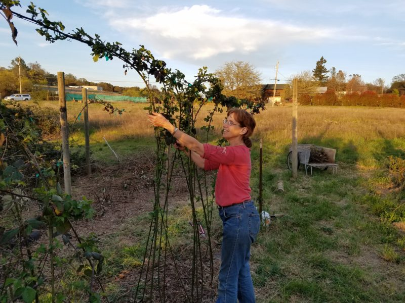 join the local food coalition - nevada county