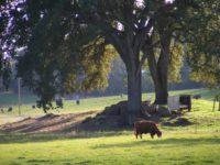 Robinson Ranch, penn valley, farm potluck