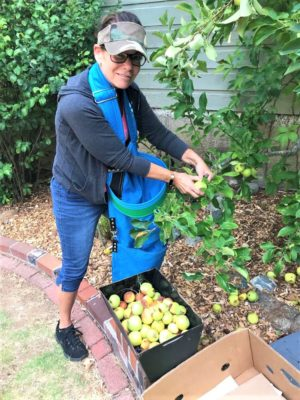 Elizabeth gleaning apples, 2018