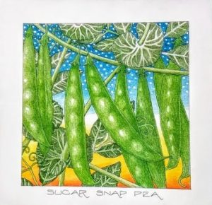 sugar snap pea - randy griffis