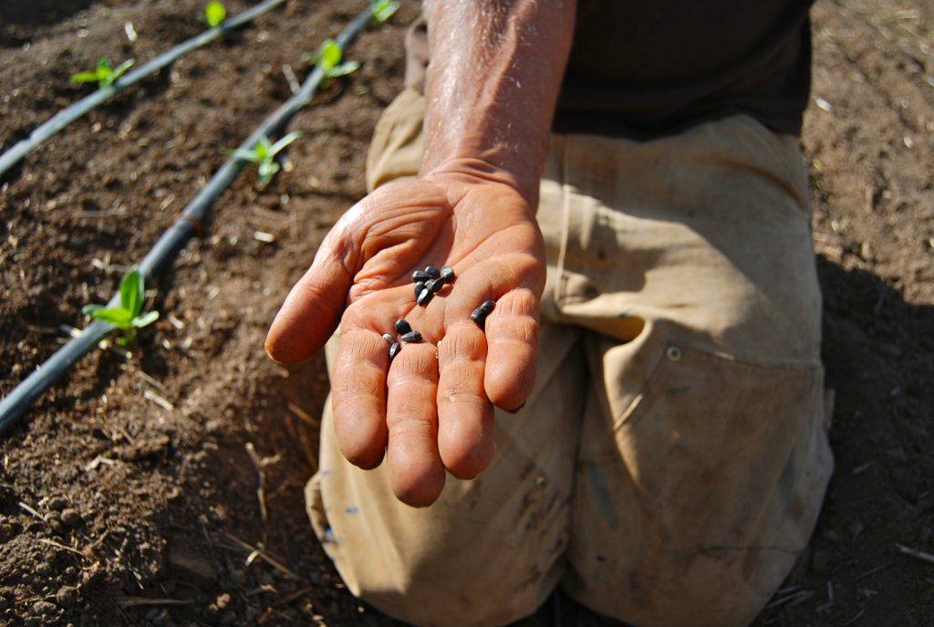 seed saving 2019