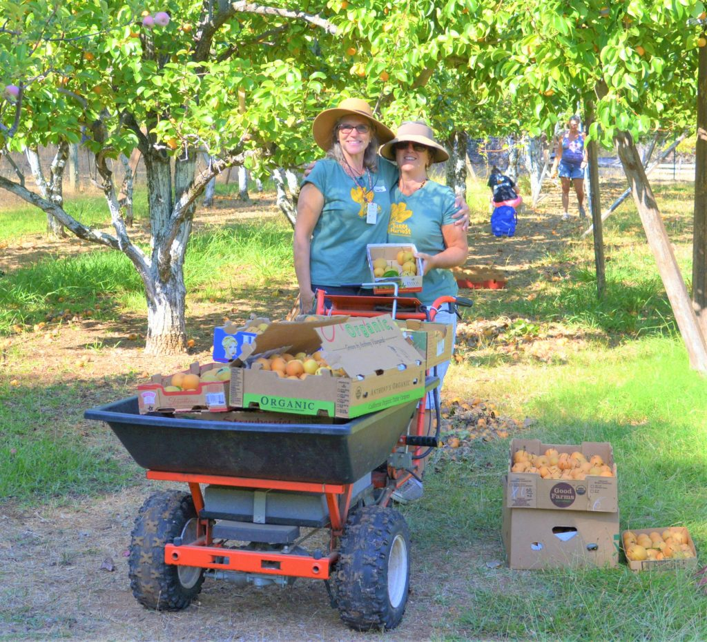 laurie michel and tina hannon - volunteer harvest leaders 2019 gleaning season