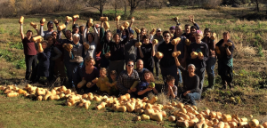 gleaning volunteers 2019 at johansen farm